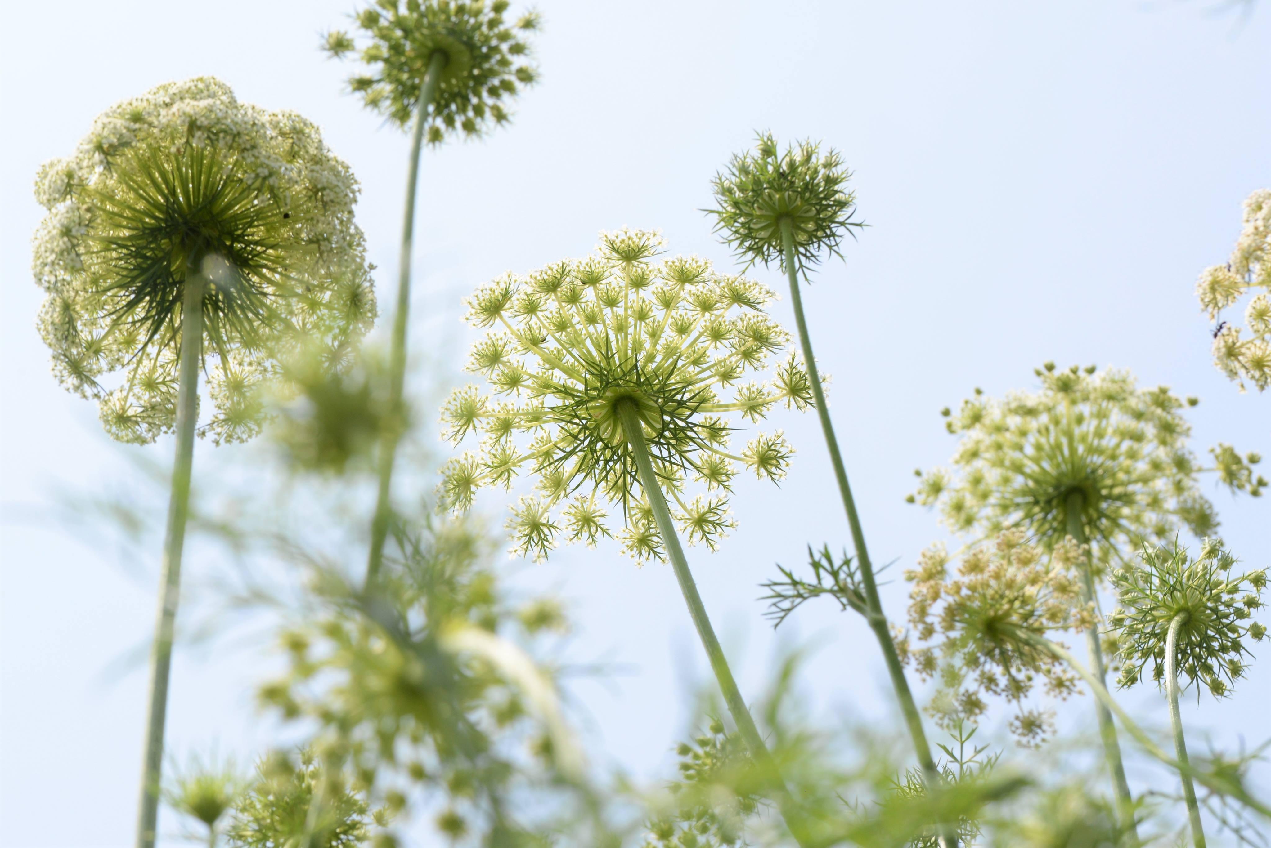 6/18金-23水  鈴木純 写真展「種から種へ 命つながるお野菜の一生」
