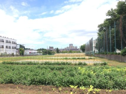 国分寺・ほんだ自然農園さん訪問記:2017.6月
