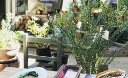 KoHo×CafeSlow ~ 国分寺から世界へ「小さな森」プロジェクト