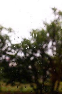 雨の季節の、雨の日特典