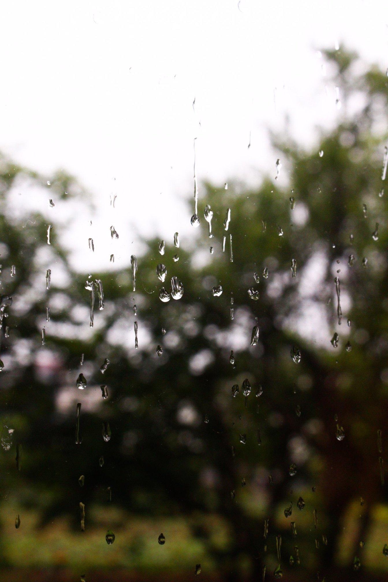 これからはじまる雨の季節に~雨の日特典はじめます