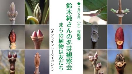 2/6土夜<オンライントークイベント>『 鈴木純さんの冬芽観察会 ~まちの植物は友だち 』